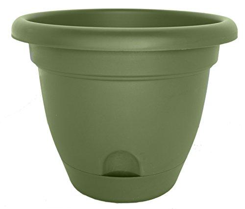Bloem Lp0842–12 Lucca Pot de Fleurs, 20,3 cm, Le Salon Vert, 12-Pack