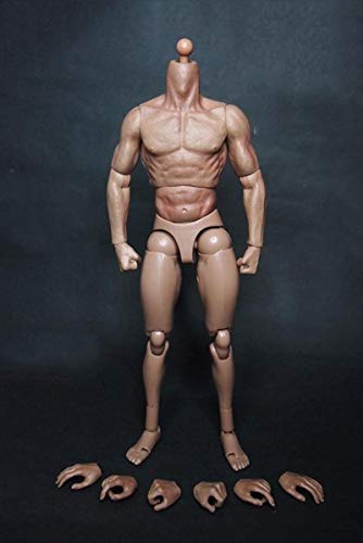 1:6 Scale Fitness Figure Muscular Fit Hot Toys Male ZC Toys Head Sculpt Body Model Toy Fit for Head with Neck