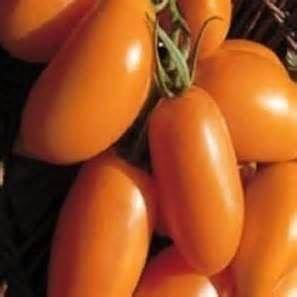 Tomate Orange Banana - tomate bouteille orange - 20 graines