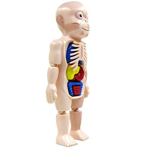 Tomaibaby Menschlicher Körper Modell Spielzeug für Kinder DIY Miniatur Menschlichen Körper Puzzle Kleinkind Montage Modell Spiel Anatomie Spiel Set Streich Beängstigend Spielzeug Geschenk