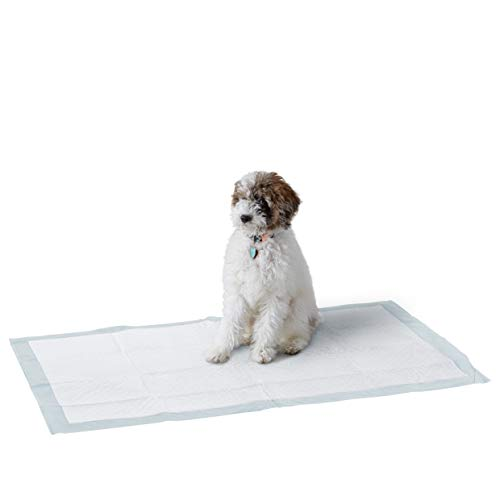 Amazon Basics Dog and Puppy Potty Training Pee Pads with Leak-proof Design and Quick-dry Surface, Giant (27.5 x 44 Inches), Regular Absorbency - Pack of 40