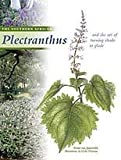 Southern African Plectranthus