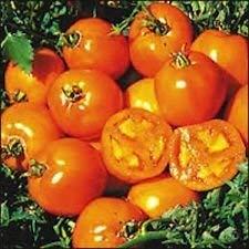 GEOPONICS 200 graines biologiques, Sunray tomate Graines De nouvelles graines pour 2017