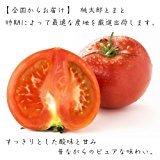 美味しい野菜 旬の産地からお届け 桃太郎トマト 12kg入箱