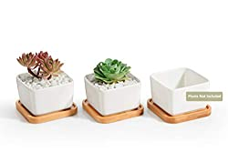 Square Design Succulent Plant 3 Pack
