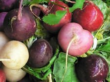 Egg 750+ Radis Pques Mix Graines Racine légumes Salade savoureux gros Lot