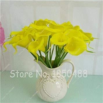 Multi-couleur Calla Fleur vrai Calla Lily Graines d'amour élégant Noble Symbolise Graines de fleurs de plantes d'intérieur Bonsai Balcon Fleur-50 3