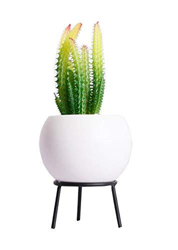 Phoenix Wonder Mini Planta suculenta Artificial en Maceta de cerámica, E29