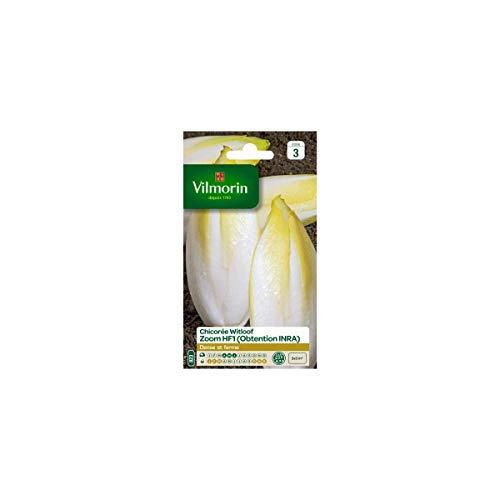 Vilmorin - Sachet graines Chicorée Witloof ZOOM HF1 - Endives