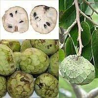 5 Semi di Cherimoya Fruit RLP085 (Annona cherimola)