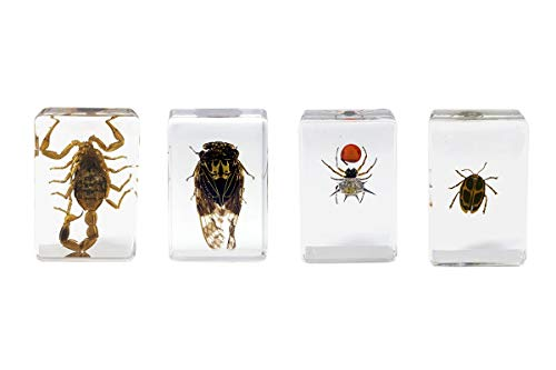Celestron - 3D Bug Specimen Kit #4 - Observe Insects - Ideal Accessory for Any Celestron Digital Microscope, Model: 44424