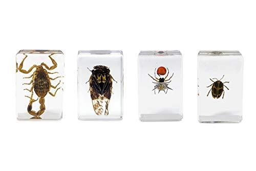Celestron - 3D Bug Specimen Kit #4 - Observe Insects - Ideal Accessory for Any Celestron Digital Microscope, Model: 44424