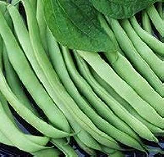 Kentucky Wonder Bush Beans, 30+ Premium Heirloom Seeds, Easy to Grow! On Sale!, (Isla's Garden Seeds), 100% Pure, 85-90% Germination Rates, Non GMO Organic, Highest Quality Seeds
