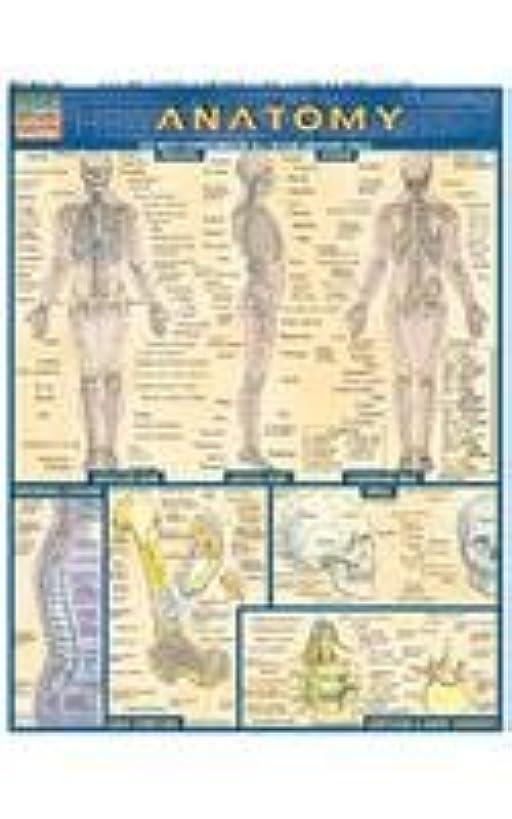 Bar Charts Anatomy Study Guide