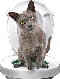 Ducomi Bobo Training Kit d'entraînement pour chats – Addroitier – Alternative à la litière pour chats – WC et chat – Système d'éducation Utilisation du WC pour chats (Training Kit)