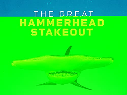 The Great Hammerhead Stakeout