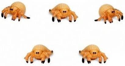 Safari Set of 12 Mini Hermit Crabs