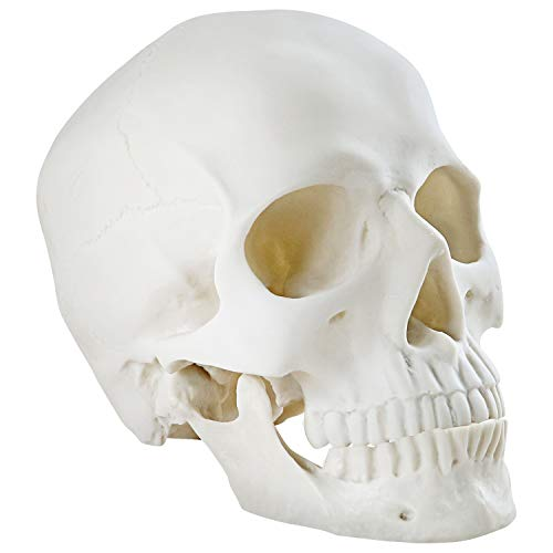 winchance Halloween Decorations Life Size Skeleton Skeleton Skull Decor Graveyard Outdoor Halloween Home Decor Gift