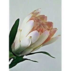 Protea Stem. Silk Flower Floral Arrangements