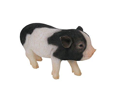 PET BANK Micro pig ペット バンク マイクロ ピッグ SPOT (スポット) 972