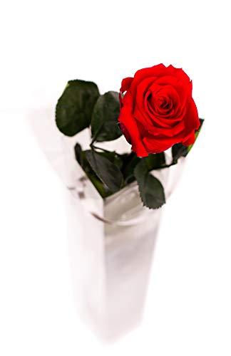 Rosen-Te-Amo, 1 rosa eterna roja con tallo (55 cm) y tarjeta de felicitación descargable. Flores preservadas como Ideas regalos para san Valentín, regalos mujer/novia o decoración Navidad/Boda