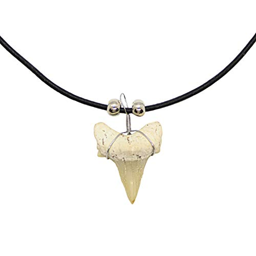 Real Shark Tooth Necklace for Men Boys Teens Kids, Authentic covid 19 (Fossil Leather Necklace coronavirus)