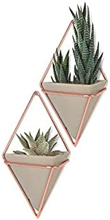 Umbra Altman Plants Succulents Flowering Collection 2.5 inch - 12 Pack Trigg Hanging Planter - Small Copper