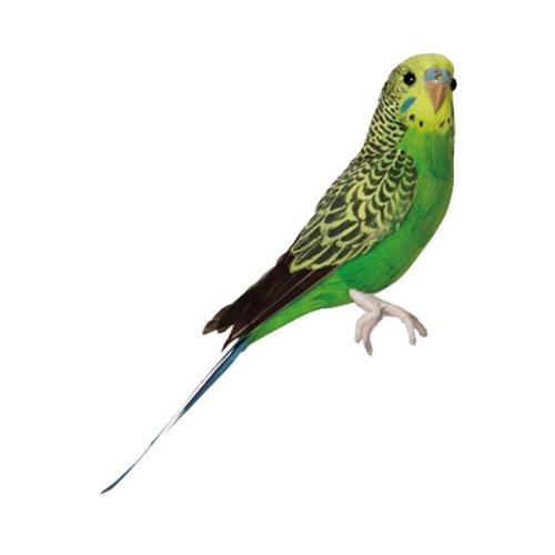 バード セキセイインコ グリーン プエブコ PUEBCO BIRDS budgie green