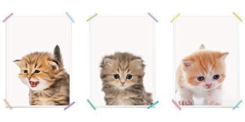 myprinti® 3er Set Kinderzimmer Poster Babyzimmer Bilder | Junge Mädchen Baby | Wanddeko Bildergalerie Deko | Größe DIN A3 | Katzenbaby Hellbraun, Katzenbaby Dunkelbraun, Katzenbaby orange, Katze
