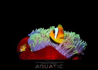 Aquatic 2010