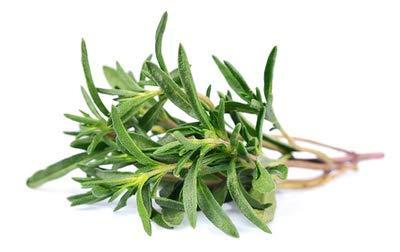 100 graines aromatiques thym de provence (Thymus Vulgarus)