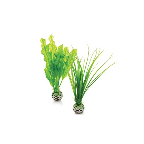 biOrb 46055 Set de 2 Plantas Verdes, Un tama�