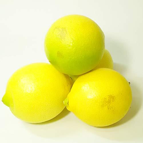 広島県尾道市瀬戸田町産 農薬不使用(無農薬) ノーワックス レモン 10kg  70-100個入り