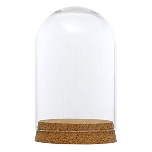 Helder glas Display Dome Cover Cloche Bell Jar Succulente Terrariums met Hout Kurk voor Home Office Tafel Decor DIY - 8x12cm