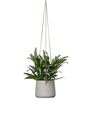 Finestgreen Hängendes Pflanzgefäß Patt Grau | Hängender Blumentopf zum bepflanzen | Urban Gardening Pflanzenampel