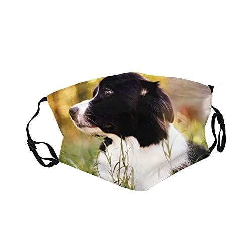 Ropa deportiva Ma_sk transpirable, lavable, reutilizable para la boca con correa ajustable para adultos y jóvenes, animales de entrenamiento con borde de collie, pastas de perro