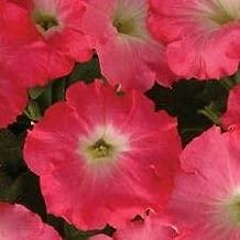 25 Pelleted Seeds Easy Wave Rosy Dawn Petunia Seeds Trailing Petunia