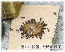 退治 屋外 アリ しつこく出現する黒アリを徹底駆除!効率よい駆除方法をご紹介 生活110番ニュース