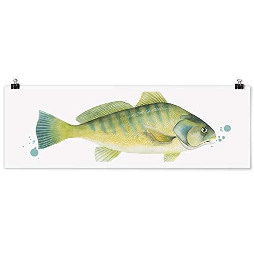 Bilderwelten Poster - Farbfang - Flussbarsch - Panorama Querformat, Glänzend 50 x 150cm