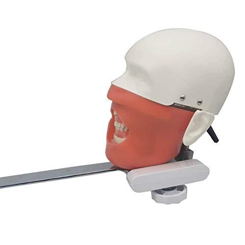 Modelo De Cabeza Simulador Dental Maniquí Dental Estomatología Bionic Diente Cabeza De Molde La Preparación del Diente Cabeza Se Puede Practicar El Sillón Dental