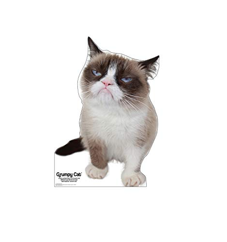 Advanced Graphics Grumpy Cat Life Size Cardboard Cutout Standup