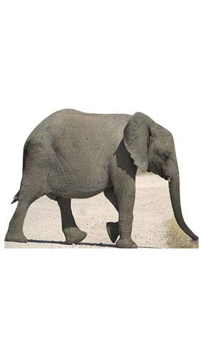 Baby Elephant - Wildlife/Animal Lifesize Cardboard Cutout / Standee / Standup