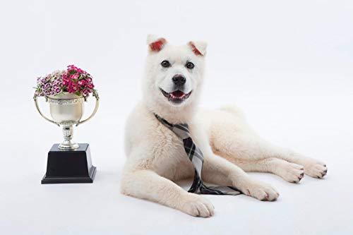 HEE WAG Trofeo Lindo Perro Pintura por Números DIY Único