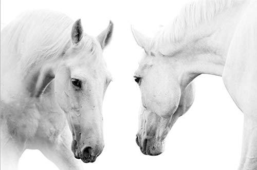 Moderne Pferdewandkunst Leinwanddrucke Tierkunstgemälde drucken weiße Pferdeplakate und rahmenlose dekorative Wohnzimmergemälde auf Leinwand A83 60x90cm