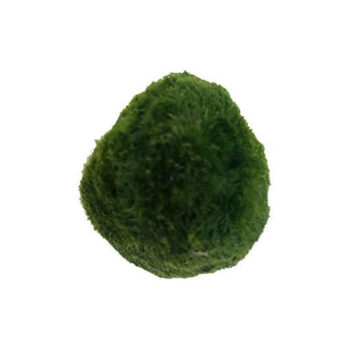 Java Moss marimo Moss Ball Stone Pad for Fish Aquarium, Aquarium Plants for Betta Fish Tank...