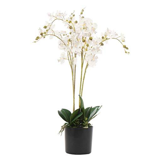 Konstväxt orkidé, blad, 60 cm, vit
