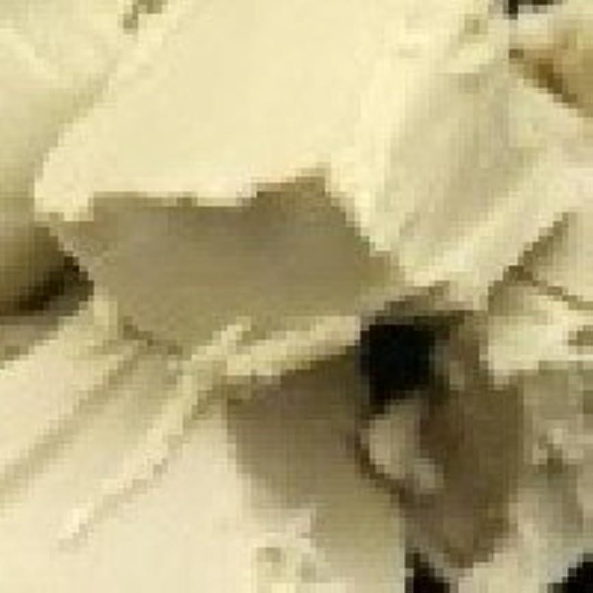 準備したレジデンス魅惑する天然 シア バター?オーガニック 【未精製】 100g