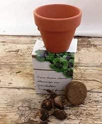 Trebol de 4 hojas de la suerte Kit de cultivo con semillas
