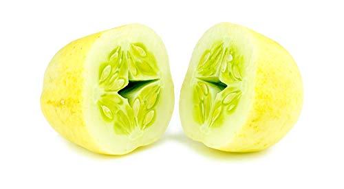 """Gurken Samen - Sorte\""""Zitronengurke (Lemon Cucumber)\"""" (10 Samen)"""