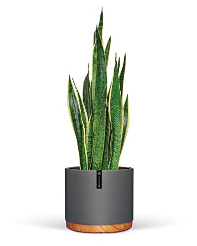 6 Inch Pot Perfect for Indoor Planter Pots- This Ceramic Planter are Indoor Pots...